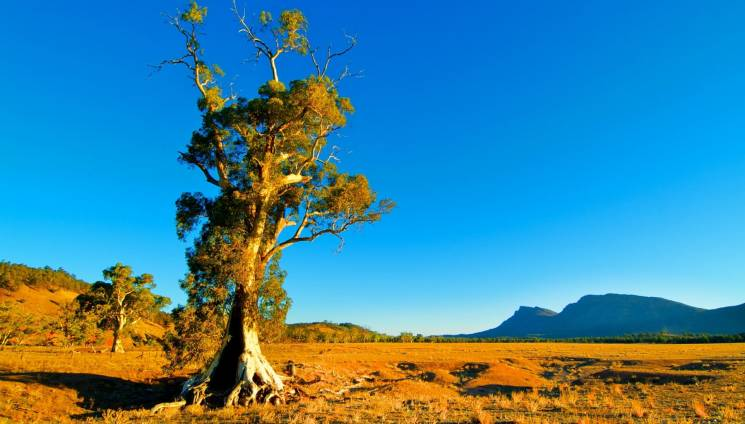 1098_lonely_tree_and_mountain_view.jpg