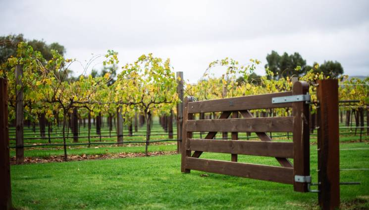 1777_1_jacobs_creek_barossa.jpg