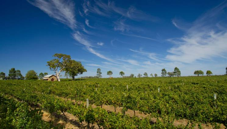 644_5_highbank_vineyards_coonawarra.jpg