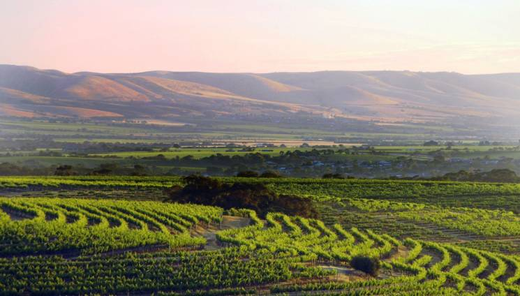 785_scenic_view_5_across_vineyards_12268-364-c.jpg